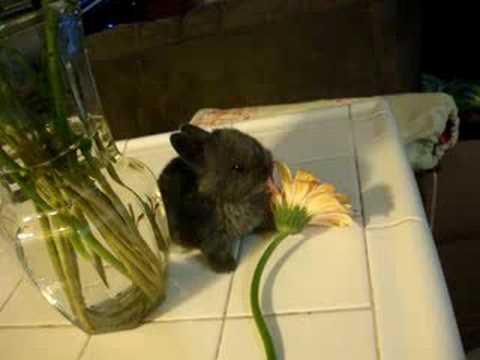 velveteen rabbit eats a daisy?