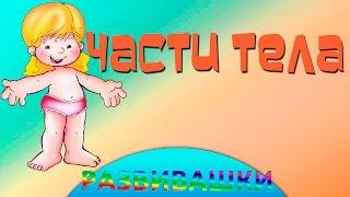 Английский язык для малышей части тела видео уроки