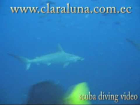 Clara Luna Scuba Diving, Bar Restaurant Spanish School