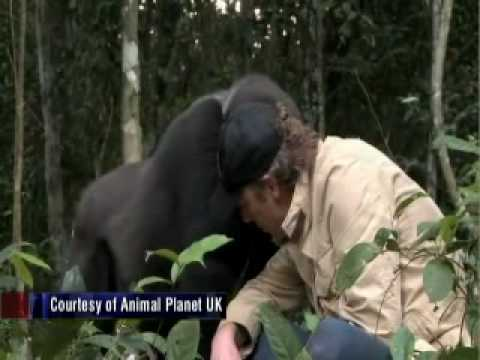 Man Reunites With Gorilla He Raised