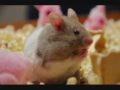 Hamster Dance Inspiration Hamster RIP... Video