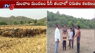 చిరుతల కలకలం | Chirutha Hulchul In Ranga Reddy District