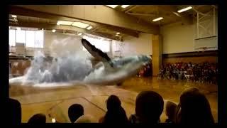 Holograms - 3D Whale