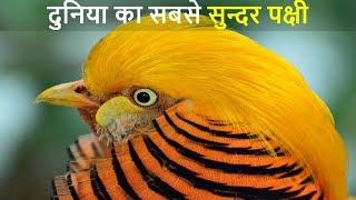 दुनिया के 10 सबसे खूबसूरत पक्षी   Top 10 Most Stunningly Beautiful Birds in the World- Part 1