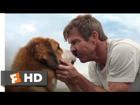 A Dog's Purpose (2017) - Bailey Comes Home Scene (10/10) | Movieclips