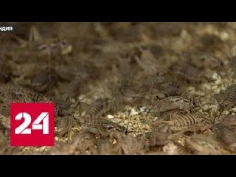 В Хельсинки прилавки магазинов заполонили насекомые - Россия 24