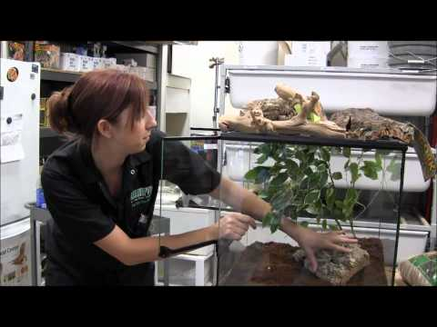 How to Build a Crested Gecko Vivarium