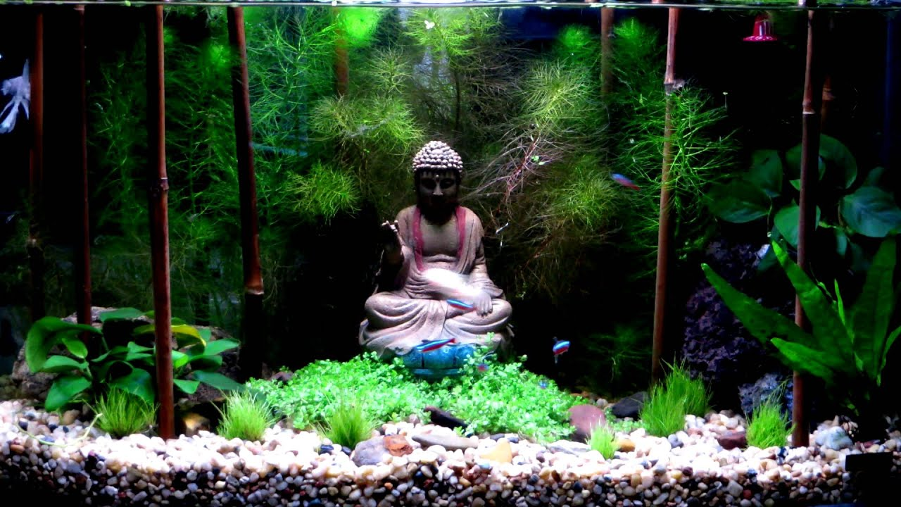 My zen 7 5 gallon planted betta tank youtube for Zen fish tank