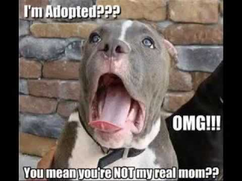 Hilarious Dog Pictures With Captions