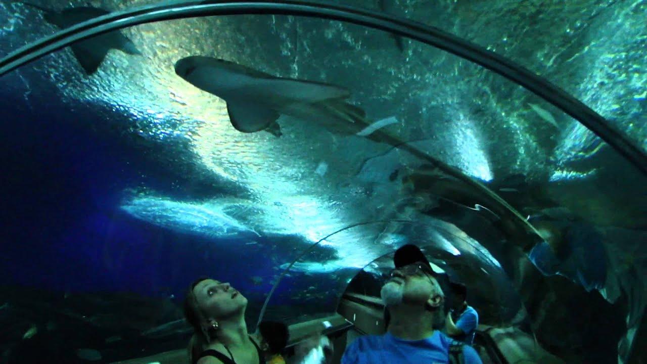 Underwater World Singapore Underwater World Singapore