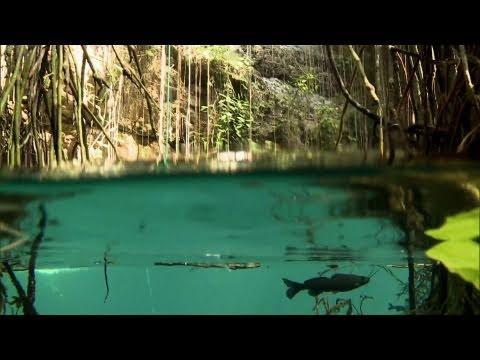 Műugrók a mexikói dzsungelben