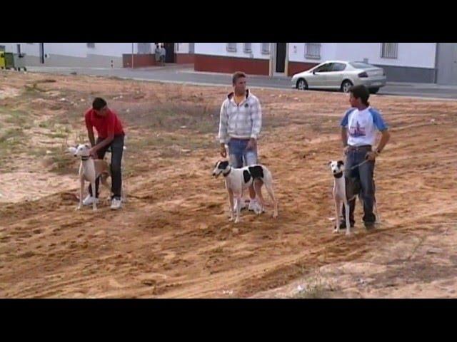 Carrera de Galgos Bollullos par del Condado. (HD)