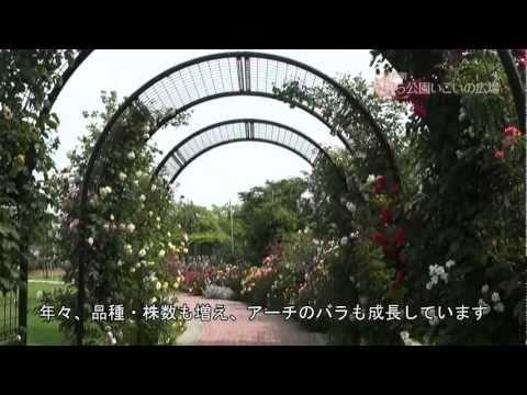 神戸町 「ばら公園いこいの広場」 ~バラの花~