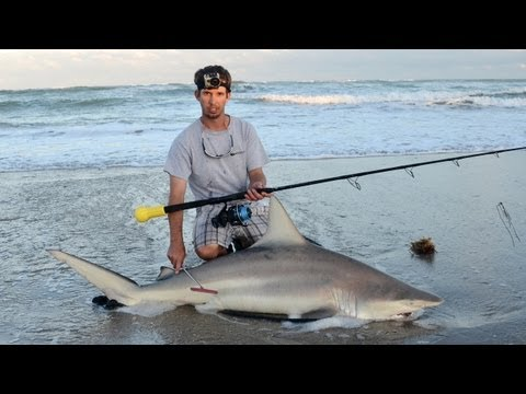 Sebastian Inlet Shark Fishing!