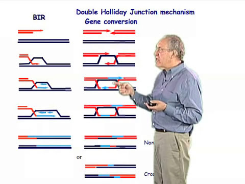 Gene conversion - Jim Haber (Brandeis)
