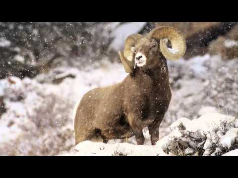 """Behind the Lens"" Interview with Colorado wildlife photographer Vic Schendel"