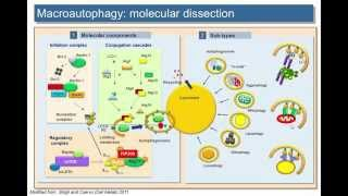 Selective autophagy in the fight against aging and age-related disorders