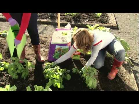 TUI TIME How to grow great potatoes in your garden at home