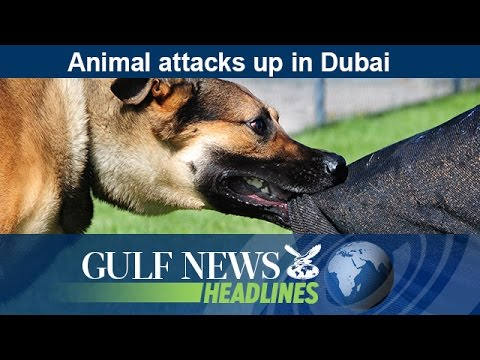 Animal attacks up in Dubai - GN Headlines