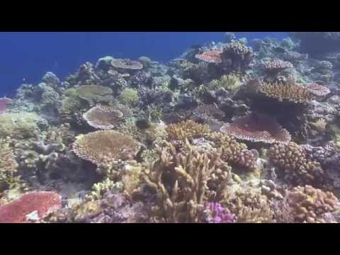 Corals reef of Philippines