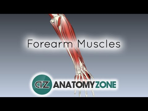 Forearm Muscles Part 1 - Anterior (Flexor) Compartment - Anatomy Tutorial