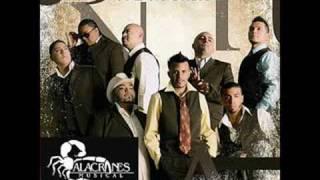 Watch Alacranes Musical Te Sigue Esperando Mi Corazon video