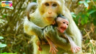 OMG! Why young mom doing this to newborn baby|Young mom not ready accept her baby|Monkey Daily 665