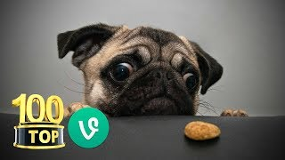 😂 Top 100 Funny Dogs Vines - Compilation - Funny Dogs Videos - LIKE = ❤️