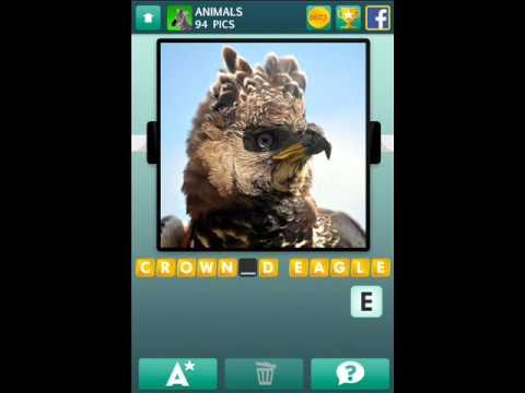 100 Pics Answers Animals 98 100 Pics Animals Level 91-100