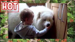 Clip hài hước nhất thế giới cười bể bụng về trẻ em