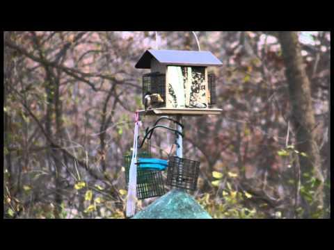 woodpeckers.mp4