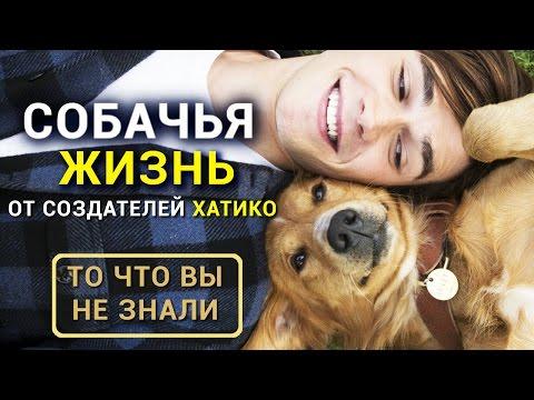 Собачья жизнь - Все что вы не знали о фильме от создателя Хатико