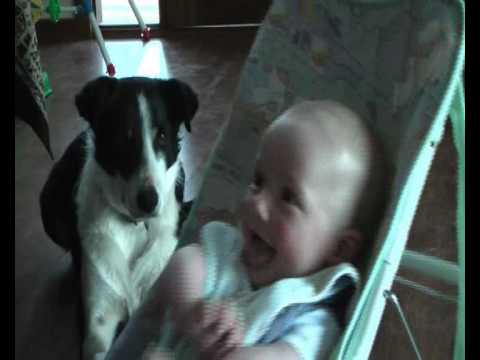 Border Collie watching and playing with Baby