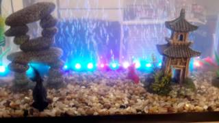 Gold fish Home aquarium