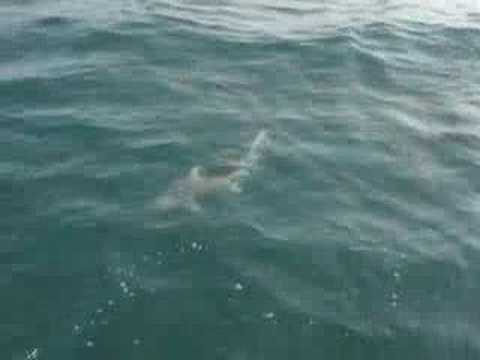 Wrightsville Beach Shark Fishing