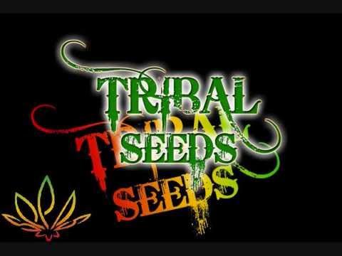 Tribal Seeds Logo Tribal Seeds Beautiful