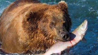 Thế giới động vật | Thiên nhiên hoang dã nước Nga - vùng Siberi thuyết minh