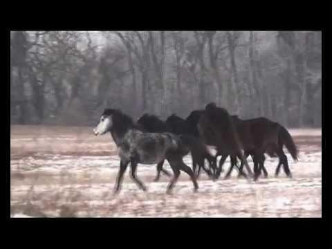 Caii din Letea