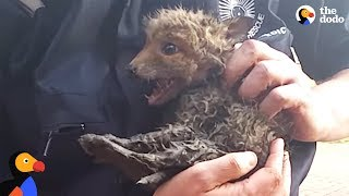Baby Fox Trapped In Pipe Can't Wait To See Mom Again | The Dodo