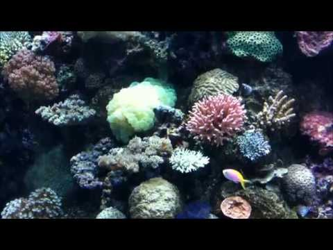 RWS Marine Life Park Tour