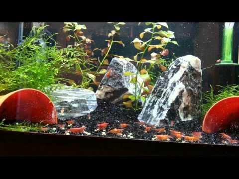 My 50litre Shrimp Tank