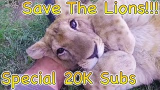 Support The Lions !!! (Special 20.000 subs!)