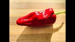 TARAHUMARA Chile Review by Bishop Brad & Refining Fire Chiles