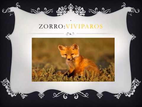 TIPOS DE REPRODUCCION DE LOS ANIMALES oviparos , ovoviviparos o viviparos  con diferentes animales