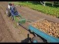 Уборка картофеля 2017. Часть 2. Мотоблокопоезд: сам копает, собирает и везет.
