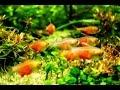 Ikan-ikan Hias cantik dalam Aquarium thumbnail