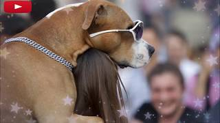 Hilarious Animals Caught In Embarrassing Situations - Top Funny Moments