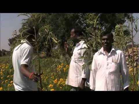 Planning of mixed vegetable crops Kannada BAIF Karnataka