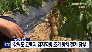 투/강원도 고랭지 감자 역병 예보