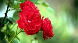 Dhoondh Rahee Thi - Zahreelay (1990) - Full Song HD